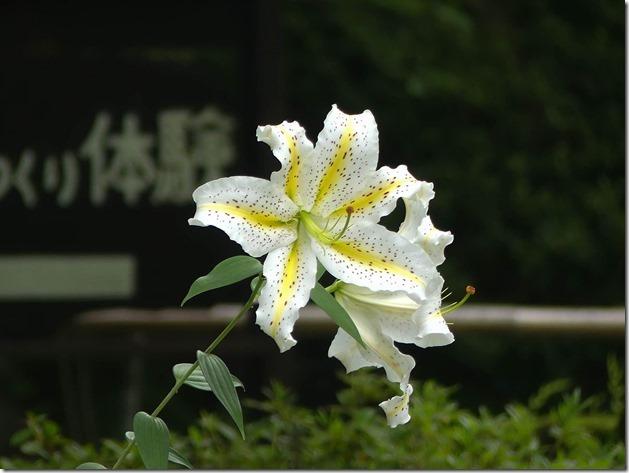 matsushima-19
